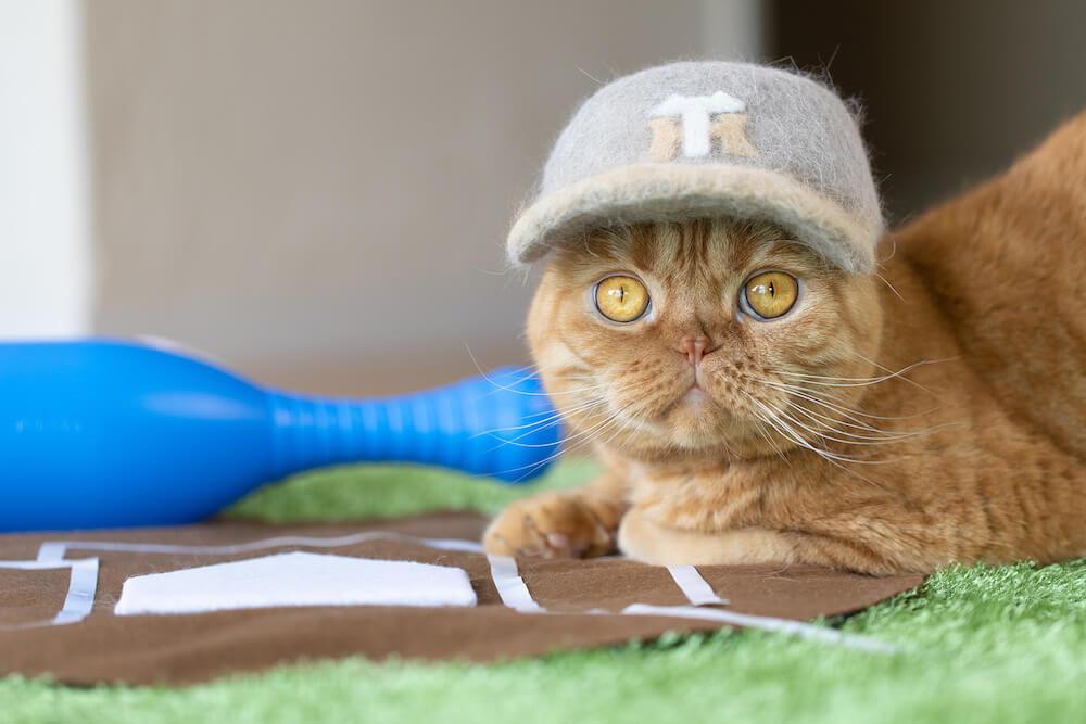 猫の抜け毛で作った阪神タイガースの野球帽をかぶる猫 by rojiman