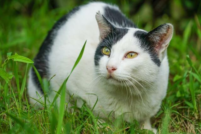 野良ネコのイメージ写真