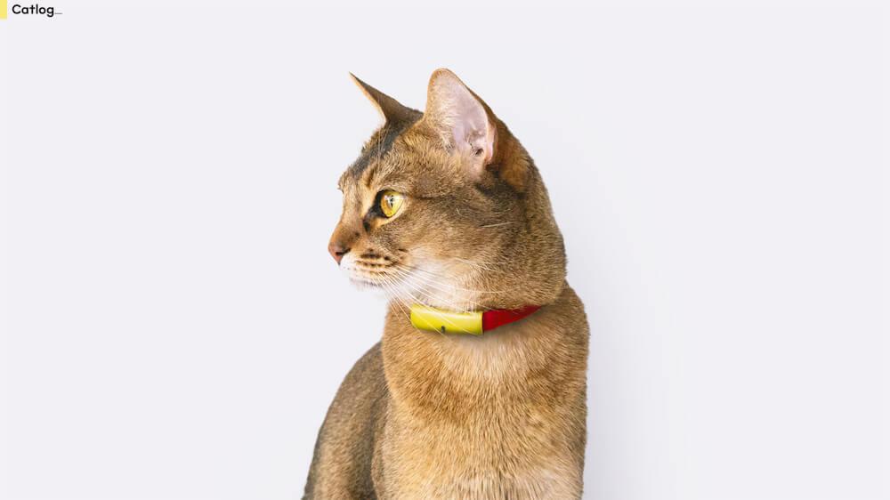 猫がCatlog(キャトログ)を装着したイメージ
