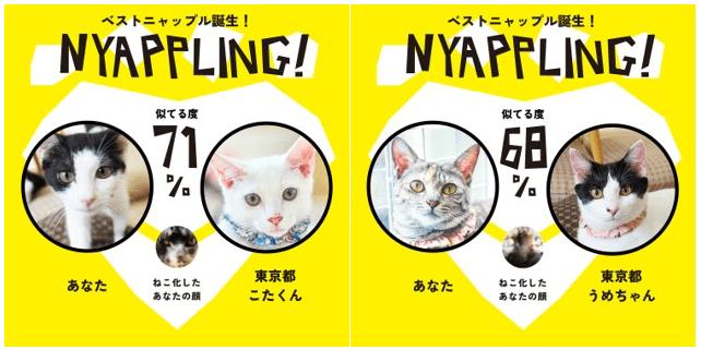 先住猫と似ている保護猫も探せる by アプリ「Nyappling(ニャップリング)」