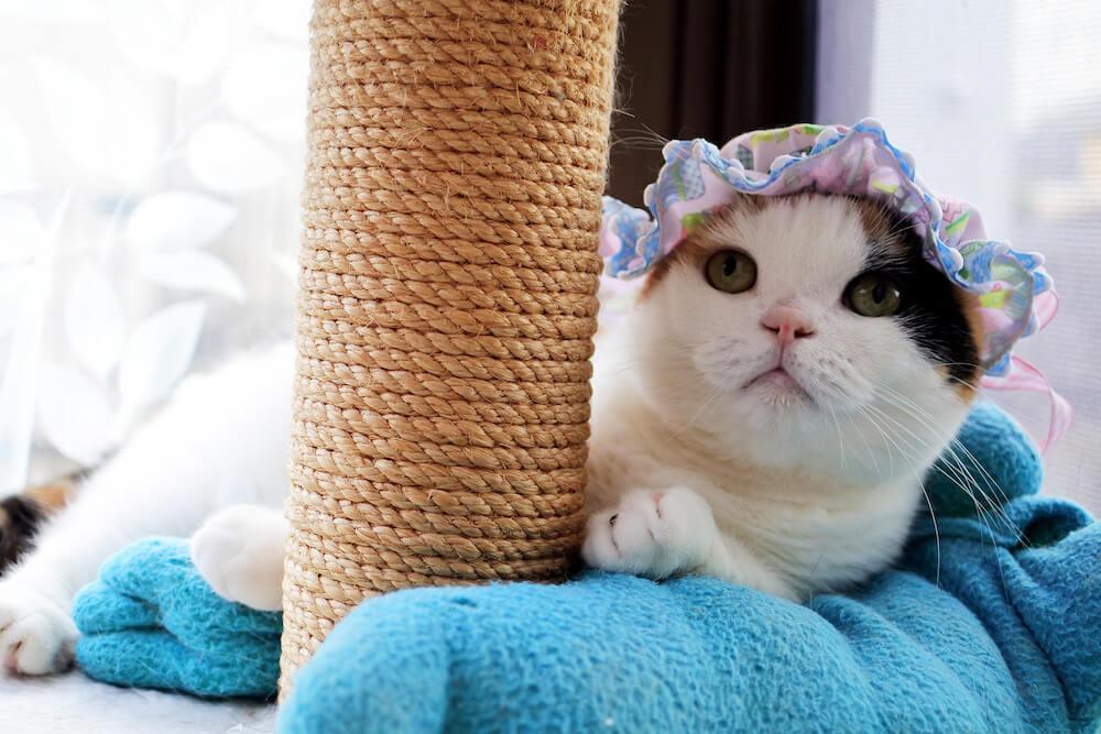 爪とぎポールの横で様子をうかがう猫 by sanchelove