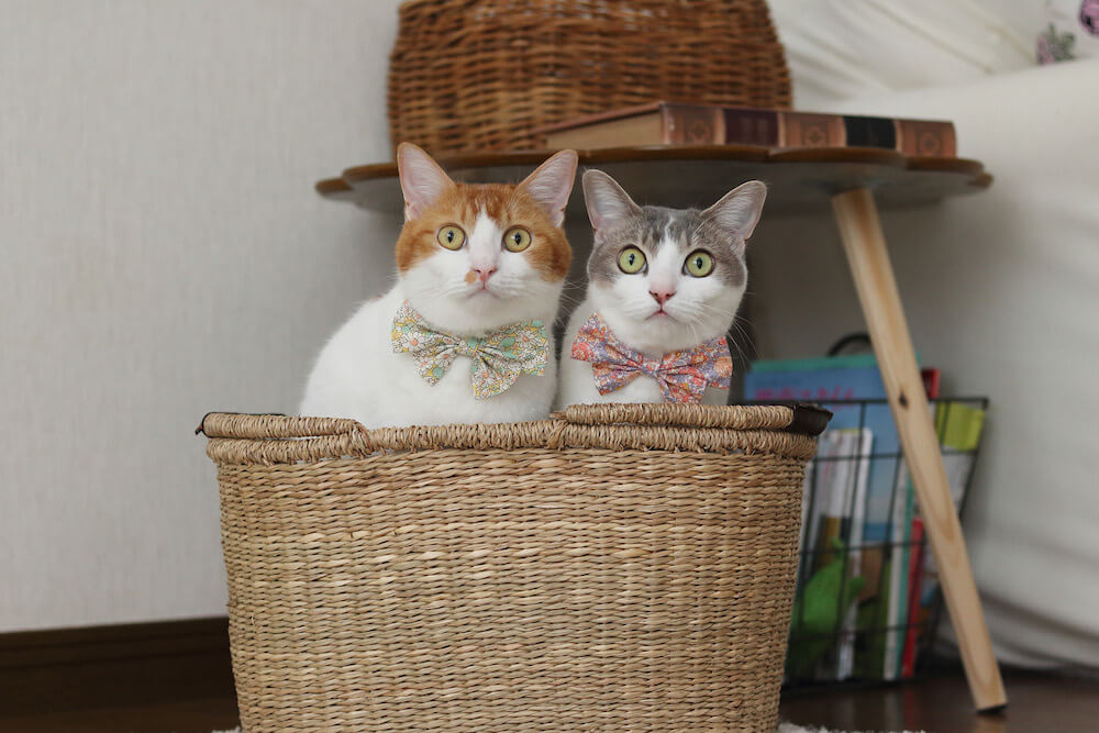 目を丸くしてこちら側を見つめる2匹の猫 by Riepoyonn