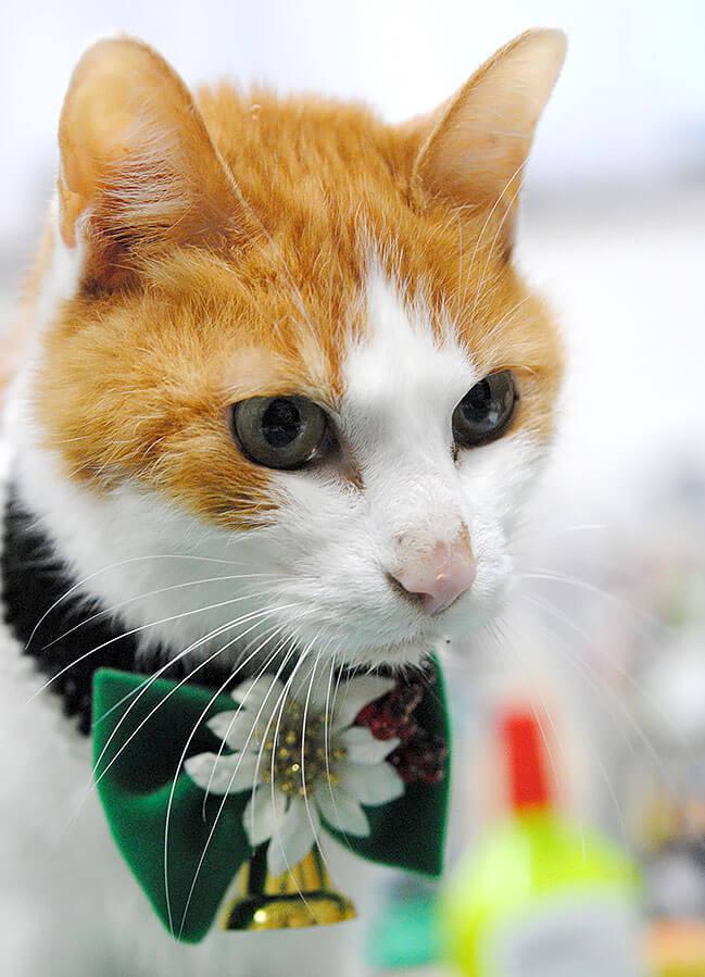 猫用の装着アイテム by フワコロ*クラフト