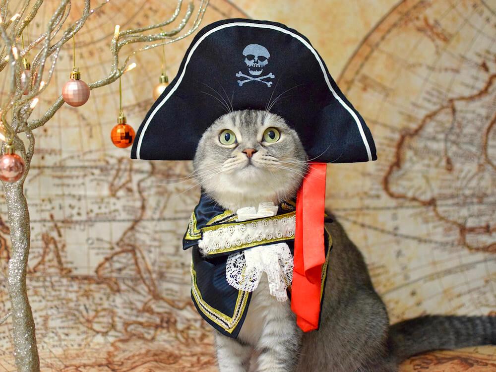 海賊船の船長にコスプレする猫 by ねこにすと展12