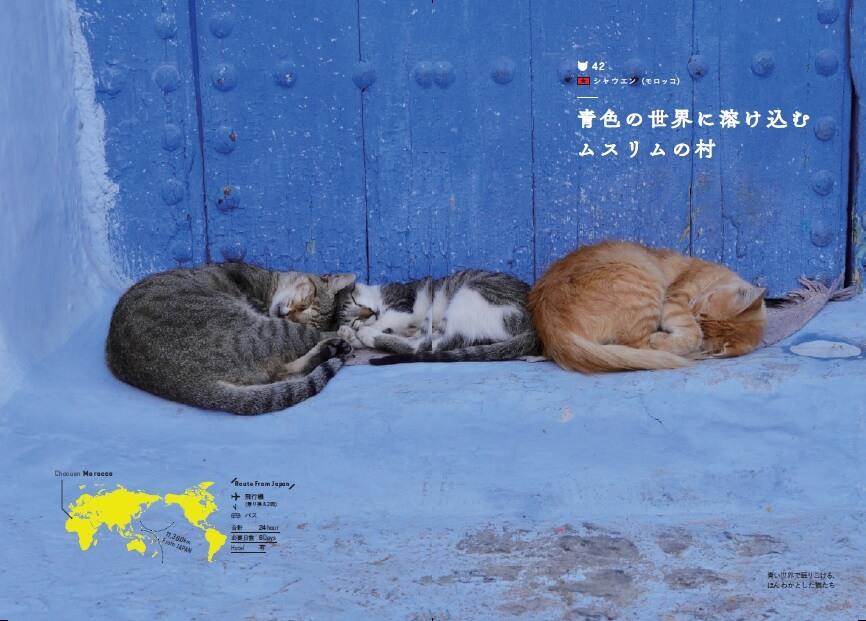 モロッコ・シャウエンの猫 by「世界の美しい街の美しいネコ 完全版」