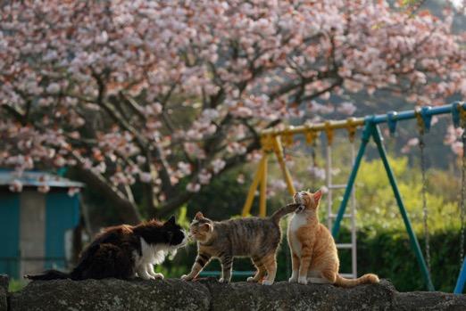 東京の湾岸地域で暮らす野良猫たちの写真 by 星野俊光の個展「猫皆幻化」