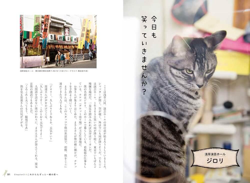浅草演芸ホールの看板猫「ジロリ」 by 看板にゃん猫