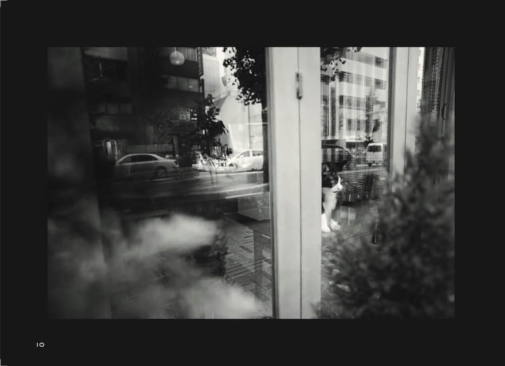 喫茶店の窓から外を見つめる猫 by 写真集「猫と喫茶店」