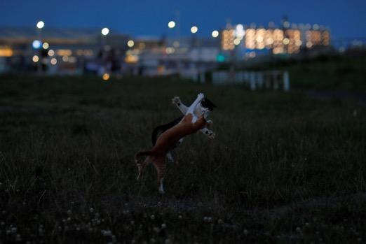 東京の湾岸地域で喧嘩をする野良猫たちの写真 by 星野俊光の個展「猫皆幻化」