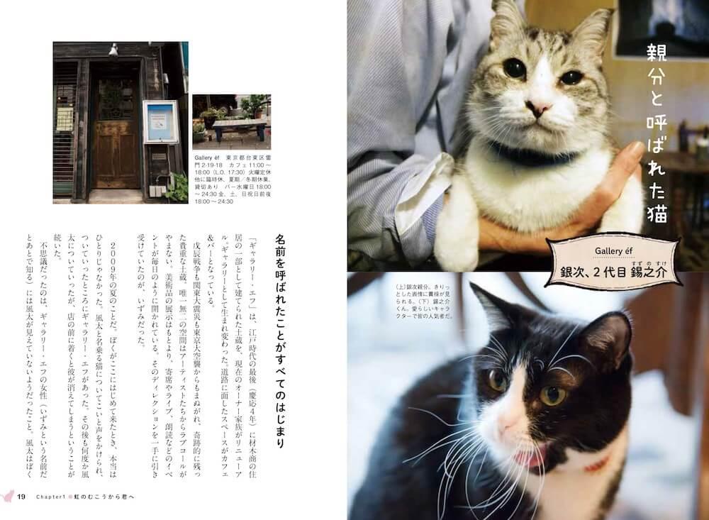 浅草にあるギャラリー・エフの看板猫「銀次、2代目 錫之助」 by 看板にゃん猫