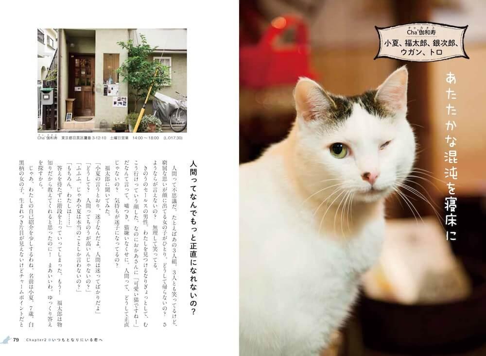 Cha´伽和寿の看板猫「小夏、福太郎、銀次郎、ウガン、トロ」 by 看板にゃん猫