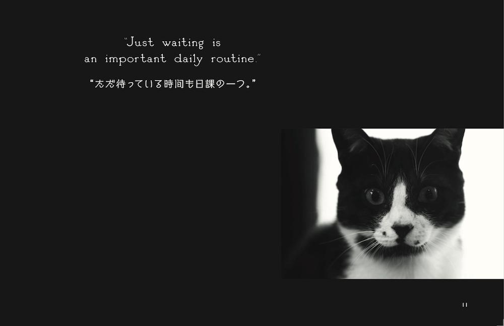 喫茶店の黒白猫 by 写真集「猫と喫茶店」