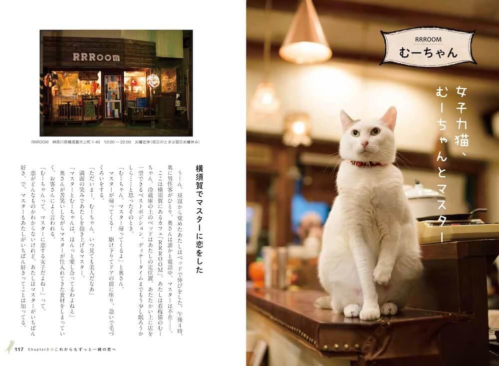 アールアールルーム(RRROOM)の看板猫「むーちゃん」 by 看板にゃん猫