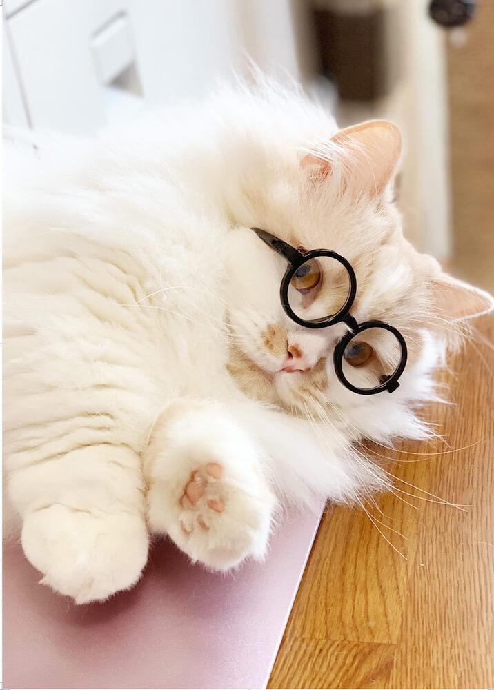 メガネをかける白猫 by ねこにすと展12