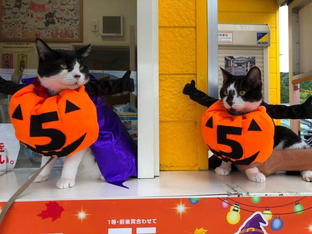 愛知県新城市の宝くじ売り場にいる看板猫「3億福ちゃん&宝くん」