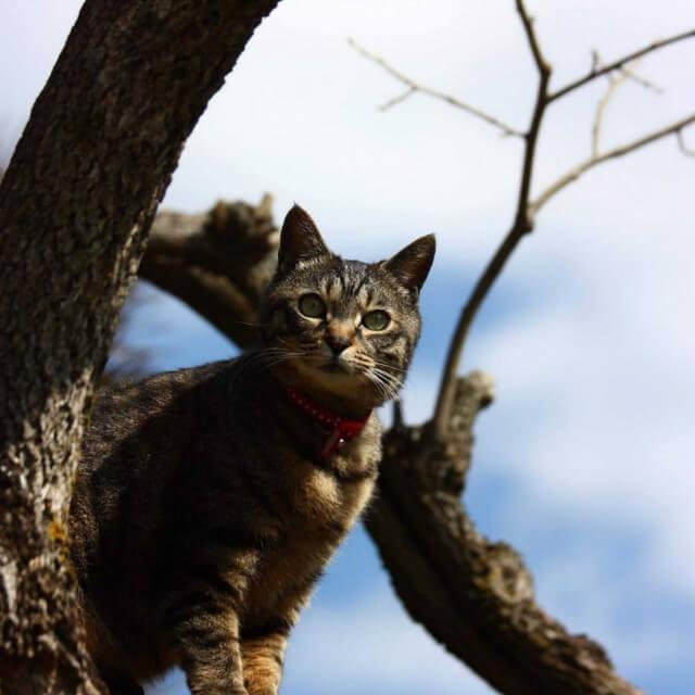 迷子猫のイメージ写真
