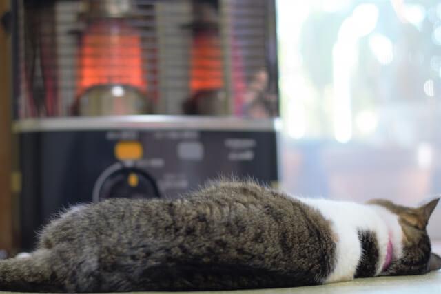 ストーブの前で寝転んで暖を取る猫