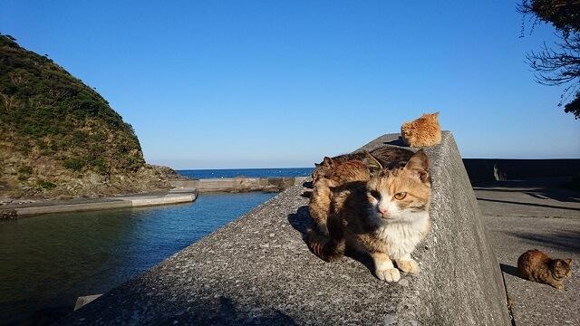 九州・大分の猫島「深島」で島の猫全頭に無料で出張TNR不妊手術を実施 by どうぶつ基金