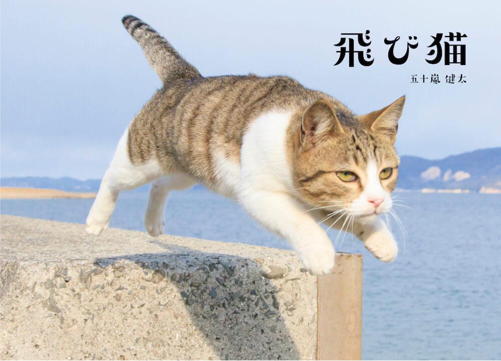 猫カメラマン五十嵐健太さんの写真作品「飛び猫」