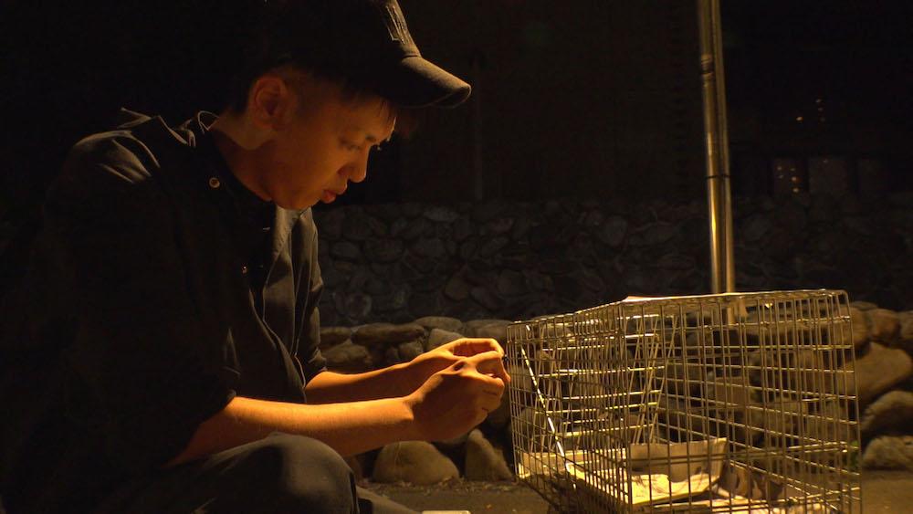 迷子猫の捕獲器を設置するペット探偵