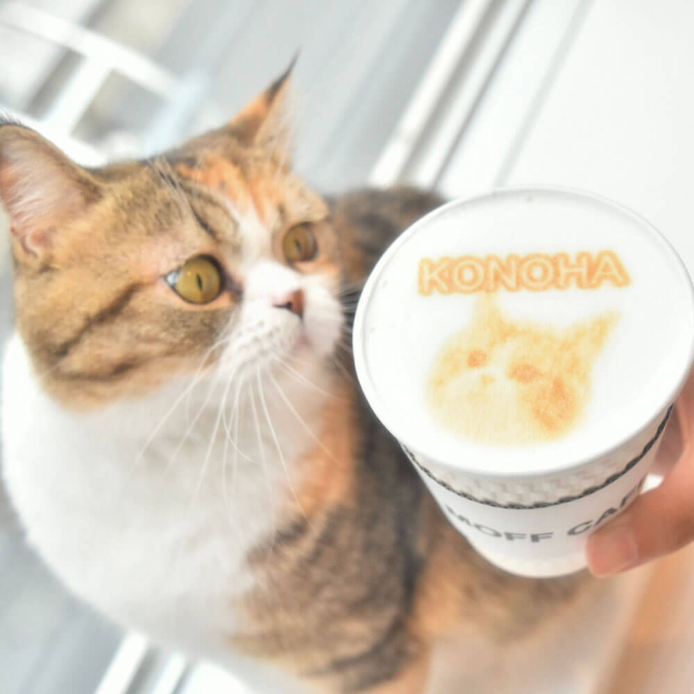 猫スタッフのラテアートを作ってもらえる猫カフェ「Moff animal cafeグランベリーパーク店」