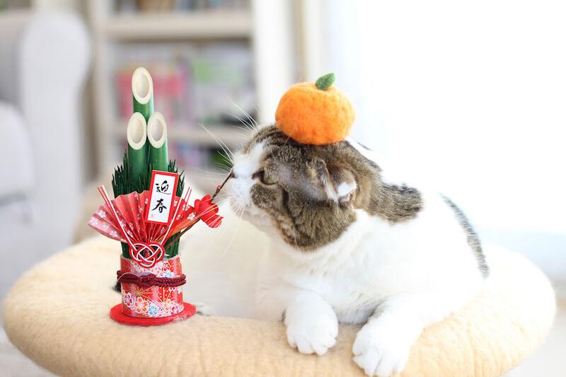 門松のニオイを嗅ぐ猫 by jun.k_2