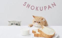 ネコの形をした高級食パン専門店「ねこねこ食パン」が関東&関西エリアに初出店ニャ!