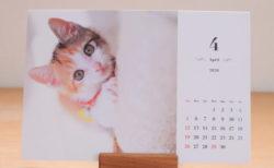 元気な猫たちの姿に癒やされる♪ 保護猫カフェを支援するチャリティーカレンダーが発売 | Cat Press