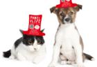 タラジャーモンの全店に保護猫の等身大パネルが出現中!里親探しを支援する取り組みなのニャ