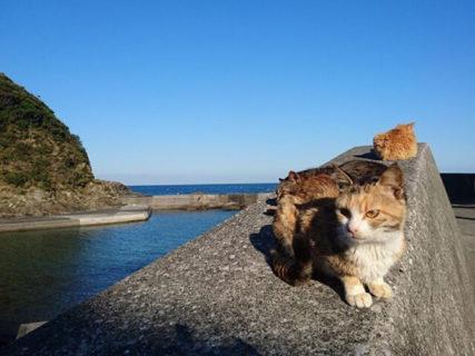 猫の数はニャンと人口の4倍以上!大分最南端の猫島「深島」で全頭に不妊手術を実施中