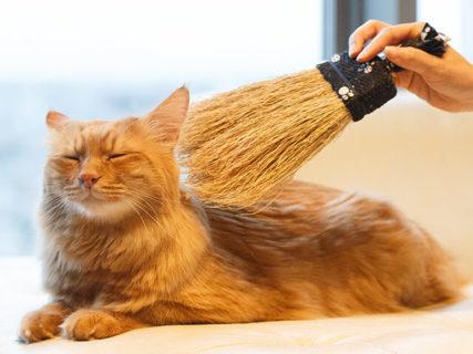 猫ちゃんを撫でるための「ほうき」が開発されたニャ…!職人技が光る本格ほうき「なでねこ」