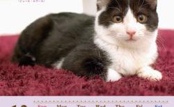 猫の名言も楽しめるニャ♪ 幸せをつかんだ猫たちのチャリティーカレンダーが発売中