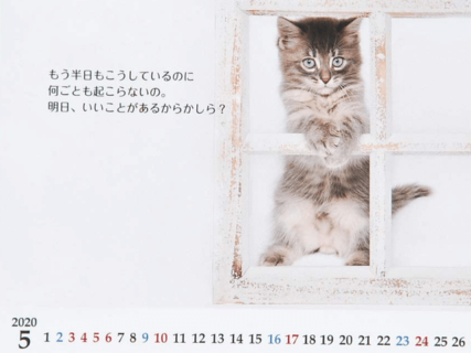 志茂田景樹さんの猫カレンダーが今年も発売!子猫の写真と温かい言葉で癒やされるニャ