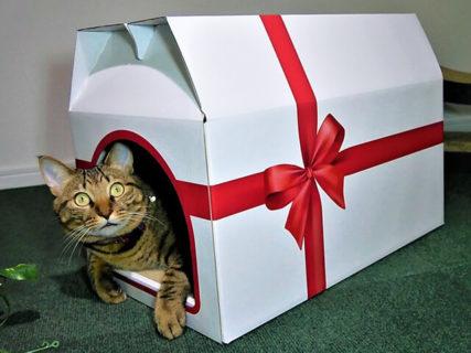 猫が中に入れば特別な贈り物に早変わり!キュートな「プレゼント型の爪とぎ猫ハウス」が誕生