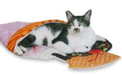 にゃんこをアイスにトッピング!?猫がインするだけで可愛い写真を撮れるお布団が登場したニャ