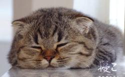 眠る猫を眺めるのは至福の時…1万枚の中から厳選したネコの寝姿を収録した写真集「寝こ」
