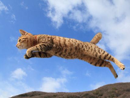 あの「飛び猫」が広島・宮城・秋田にやってくる!猫カメラマン五十嵐健太さんの猫写真展が3都市初開催