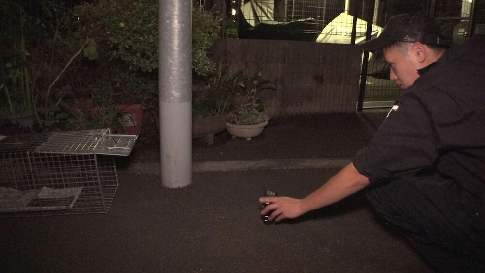 捕獲器に入る迷子猫を撮影するためカメラを設置するペット探偵