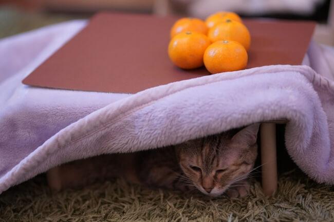 みかんが乗った猫用のこたつで丸くなる猫