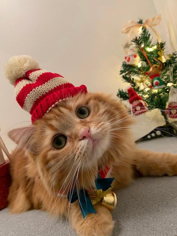 クリスマスのコスプレをする猫 by konokonoCHIKUWA_2