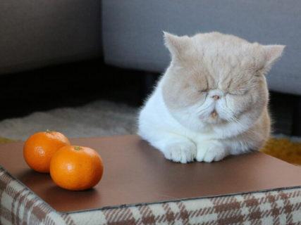 年末年始はネコ作品で癒やされるニャ!ねこ休み展が横浜みなとみらいで12/18よりスタート
