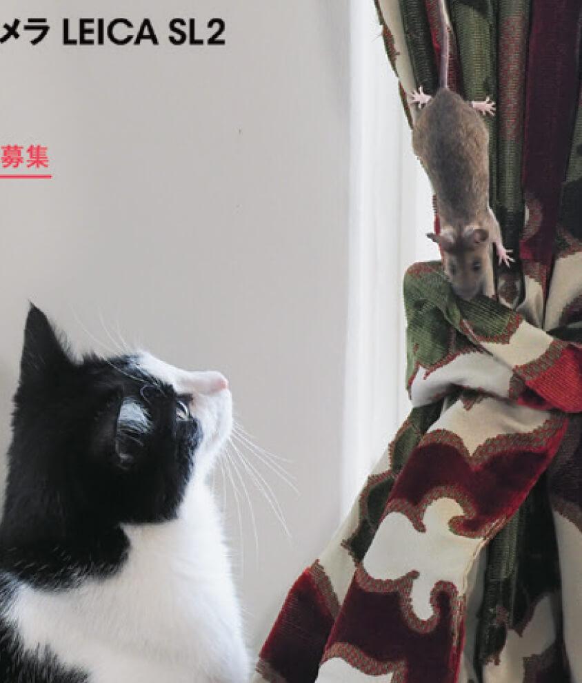 ネコがねずみを見つめる写真 by アサヒカメラ2019年12月号の表紙の拡大図