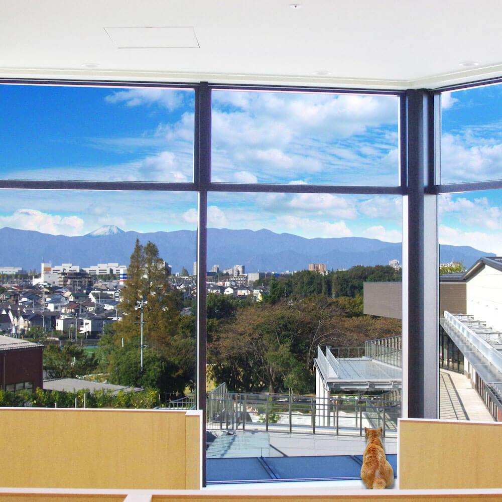 窓からはグランベリーパークを一望、富士山を望むことも可能 by Moff animal cafeグランベリーパーク店