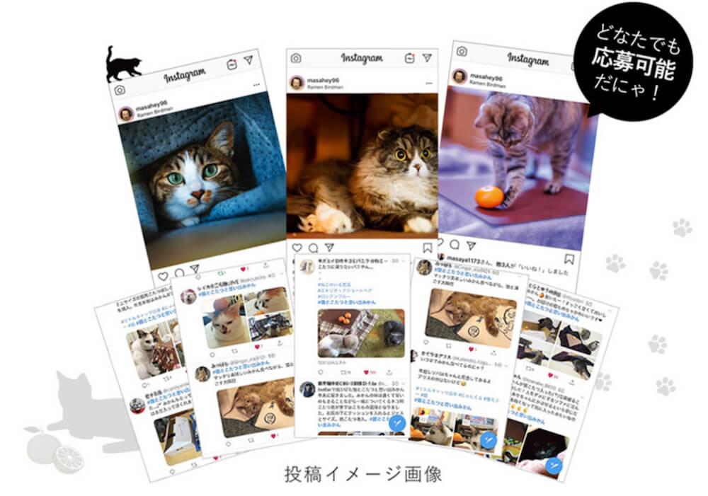 「猫とこたつと思い出みかん」の写真&動画コンテスト