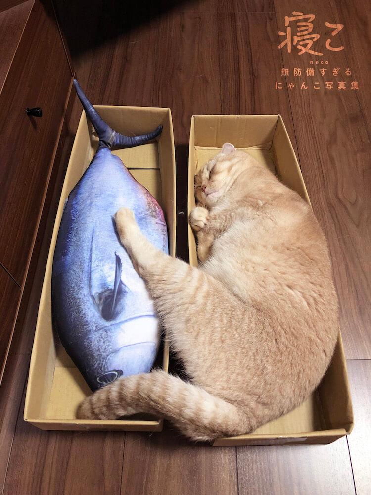 魚と一緒に眠る猫 by 寝こ 無防備すぎるにゃんこ写真集