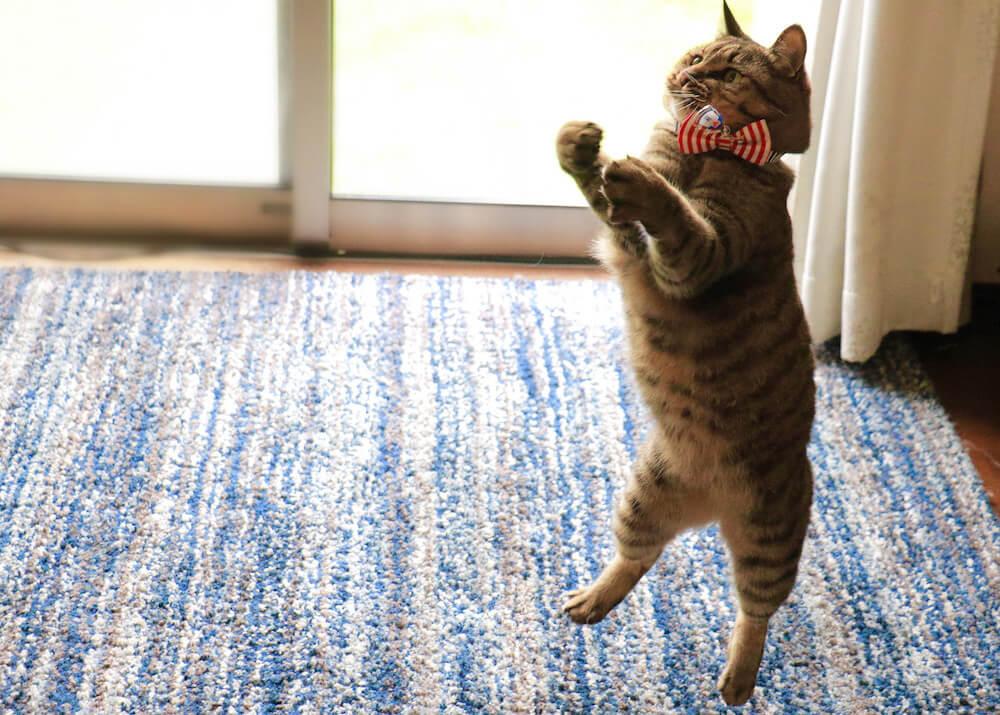猫のジャンプする瞬間を捉えた写真 by 瀬戸にゃんちさ