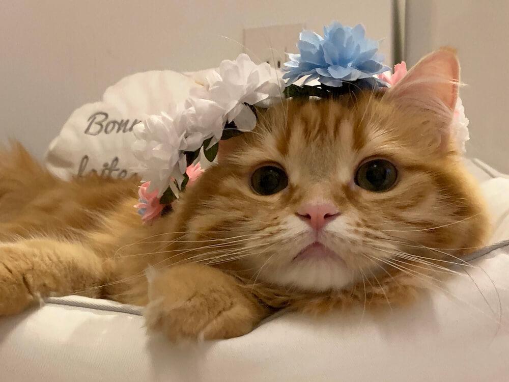 お目々がくりくりな猫 by konokonoCHIKUWA