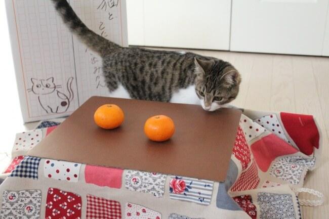 猫用のこたつの上に乗ったみかんを見つめる猫
