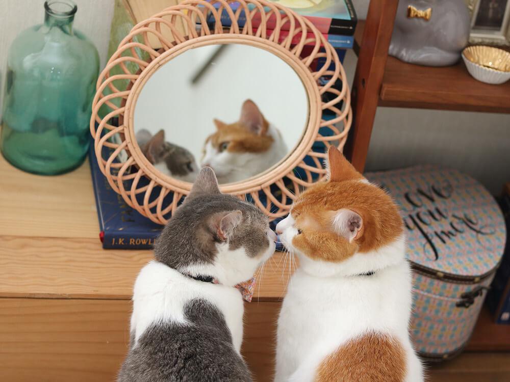 向かい合って鼻キスをする猫 by Riepoyonn