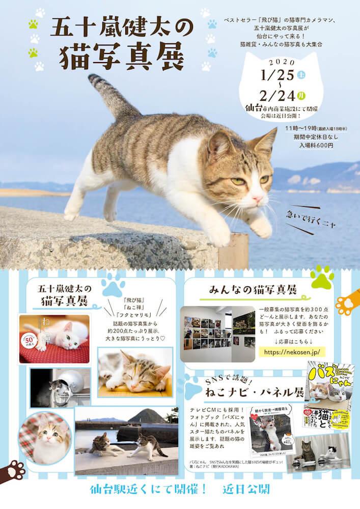 五十嵐健太さんの飛び猫写真展 in 仙台のメインビジュアル